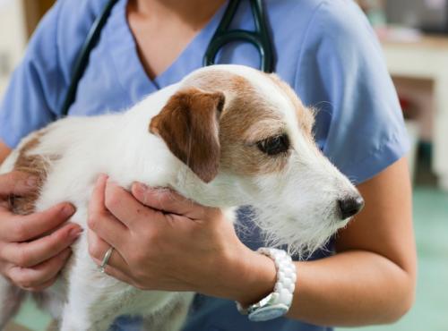 Распространенные заболевания собак и как их распознать