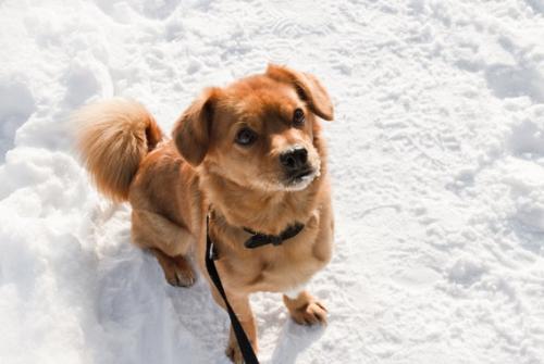 Обморожение и переохлаждение у собак: симптомы и первая помощь