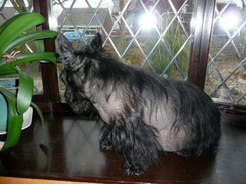 Синдром Кушинга у собак - причины, симптомы и лечение