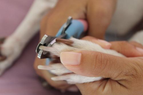 Первая помощь собаке, которая сломала коготь