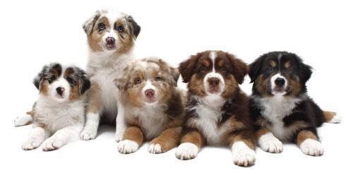 Имена для собак мальчиков