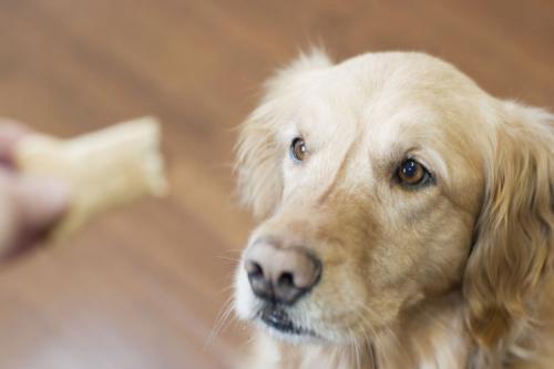 Как давать собакам таблетки - несколько простых советов