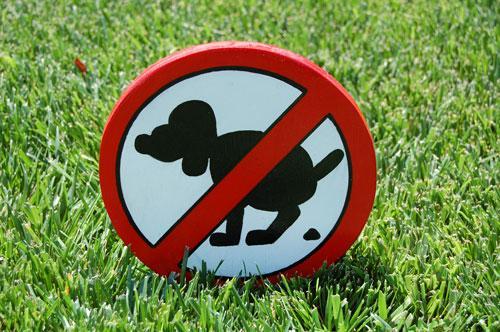 Почему нужно убирать за собакой на улице и как с этим бороться