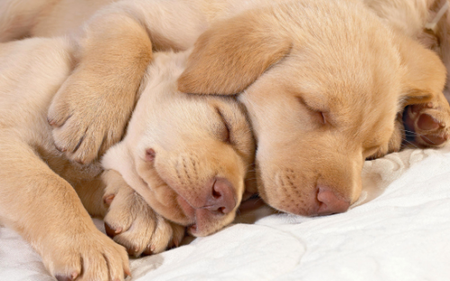 Сколько часов спят собаки