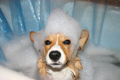 Почему собака ест мыло