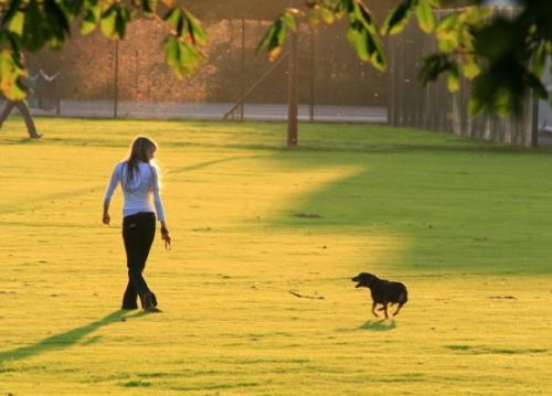Как регулярно выгуливать собаку