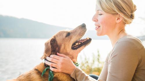 Распознают ли собаки выражение лица и другие эмоции?