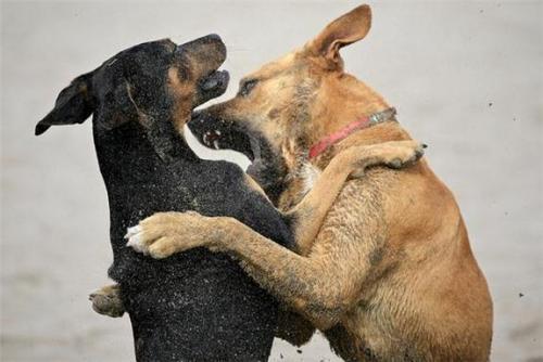 Укусы у собак