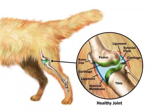 Хондроитин для собак, кошек и других животных