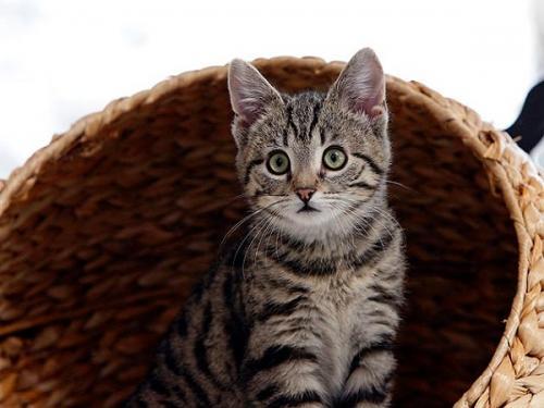 Развитие котят по неделям и месяцам: как растут котята в течение первых 6 месяцев