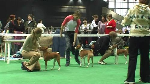 Выставки собак Краснодар