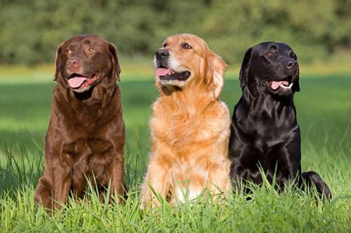 Семейные породы собак