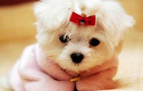 Клички для маленьких собак девочек