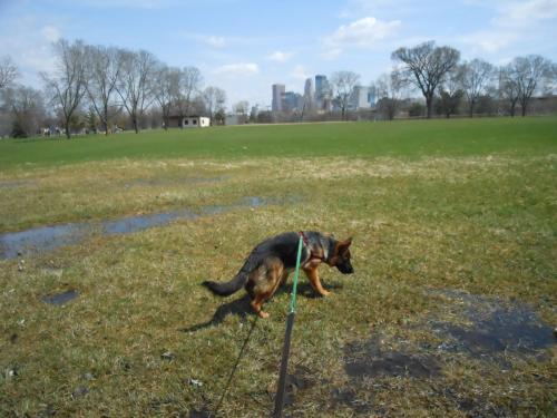 Лямблиоз у собак, симптомы заболевания и лечение