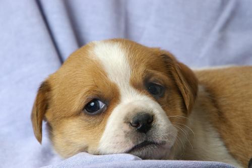 Проверка здоровья щенка
