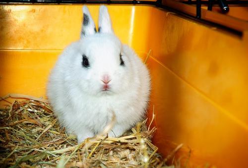 Самые распространенные заболевания у домашних кроликов