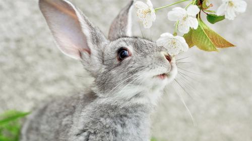 Важные факты о кроликах