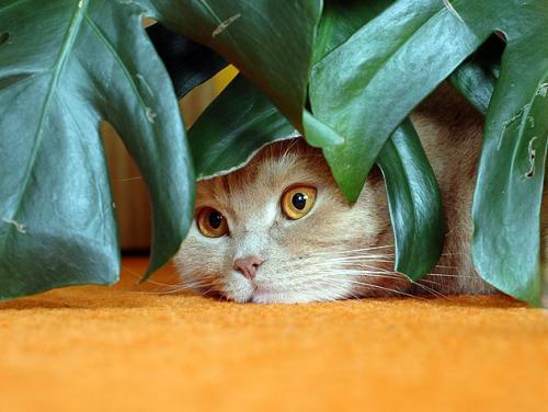 Безопасные для кошек растения