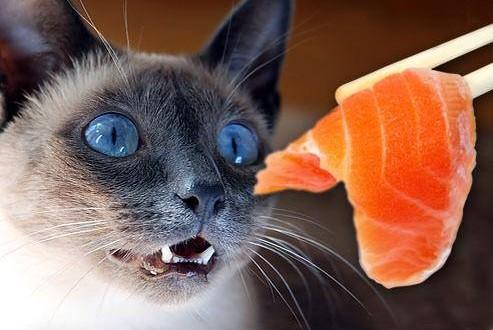 Таурин коты
