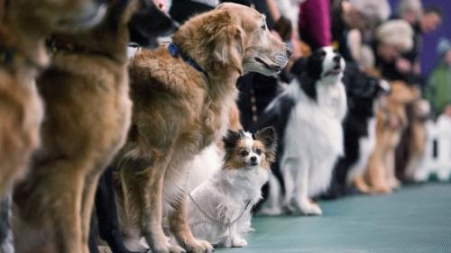 расписание выставок собак РКФ 2018 год
