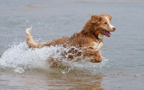 купание собаки в воде
