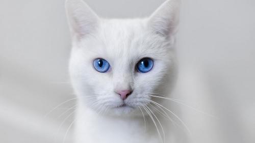 клички для белых кошек девочек