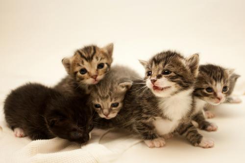 имена для котят мальчиков