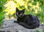 клички для черных кошек девочек