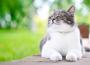 Шерсть и кожа здоровой кошки