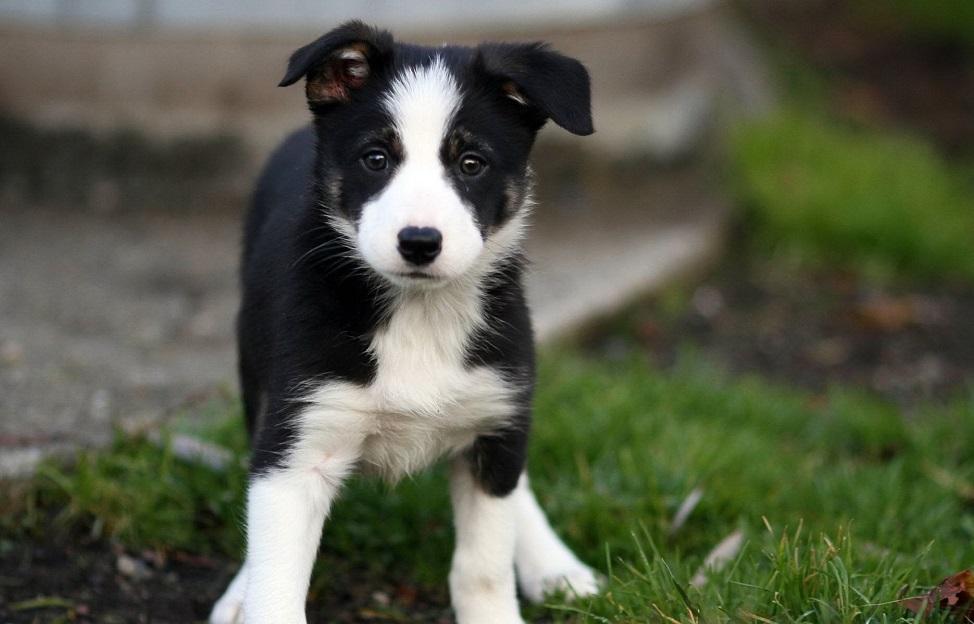 Какую породу собак выбрать для ребенка. Лучшие породы для детей ... | 624x974