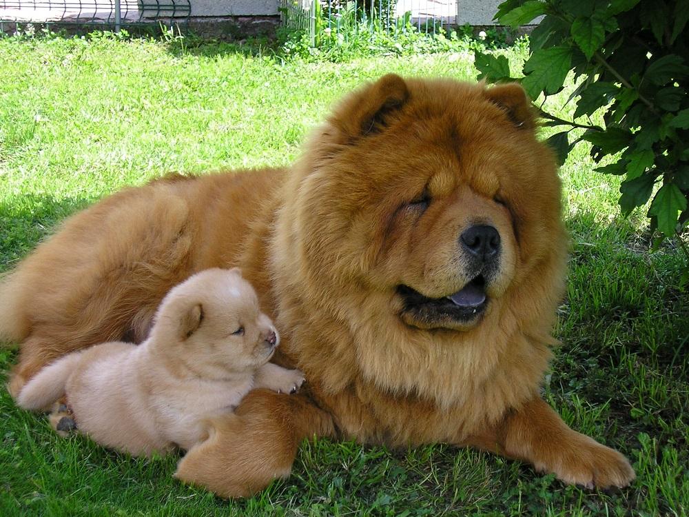 Существуют сотни лет: ТОП-5 самых древних пород собак