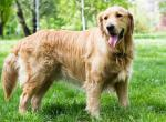 Породы собак для прогулок