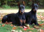 Собаки, с которыми приятно проводить время