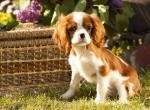 Породы собак от 5 до 10 кг