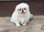 Вес щенков по месяцам