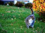 Стоит ли заводить кошку