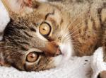 Инфекционный перитонит у кошек (FIP) - симптомы и причины заражения