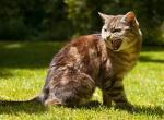 Как отучить котенка кусать ноги и руки