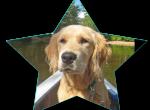 Может ли ваша собака стать звездой?