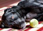 Инсульт у собак