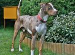 самые необычные и уникальные породы собак в мире