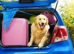 Путешествие с домашними животными: как выжить в автомобильной поездке