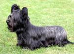 Коротколапые породы собак