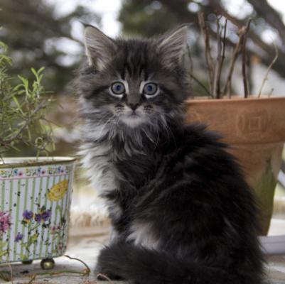 имена для котов мейн кун