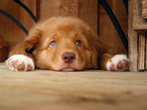 Клички для рыжих собак