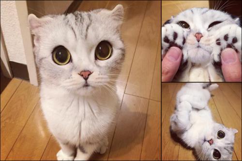 Японские клички для котов