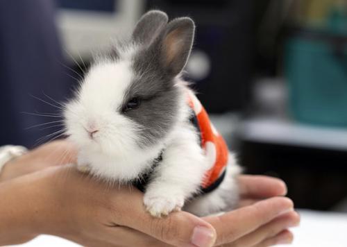 клички для кроликов девочек