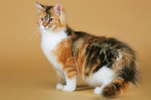 Имена для черепаховых котов и кошек