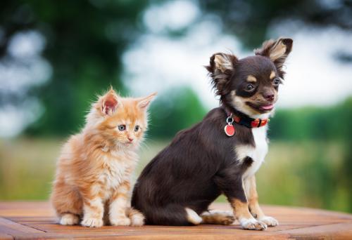 Мексиканские клички для собак