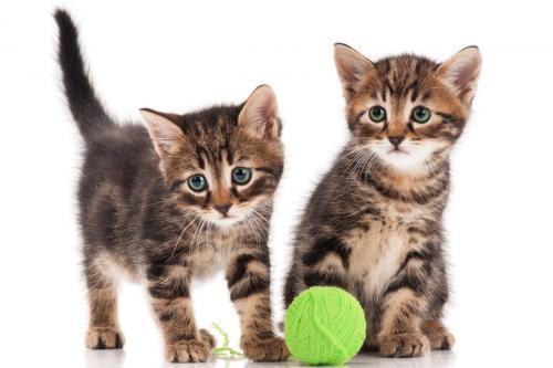 Двойные клички для котов и кошек